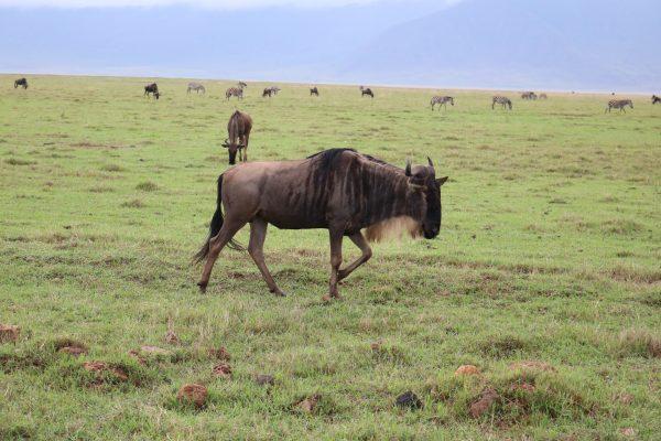 Lions, Elephants & Hippos – Oh my!