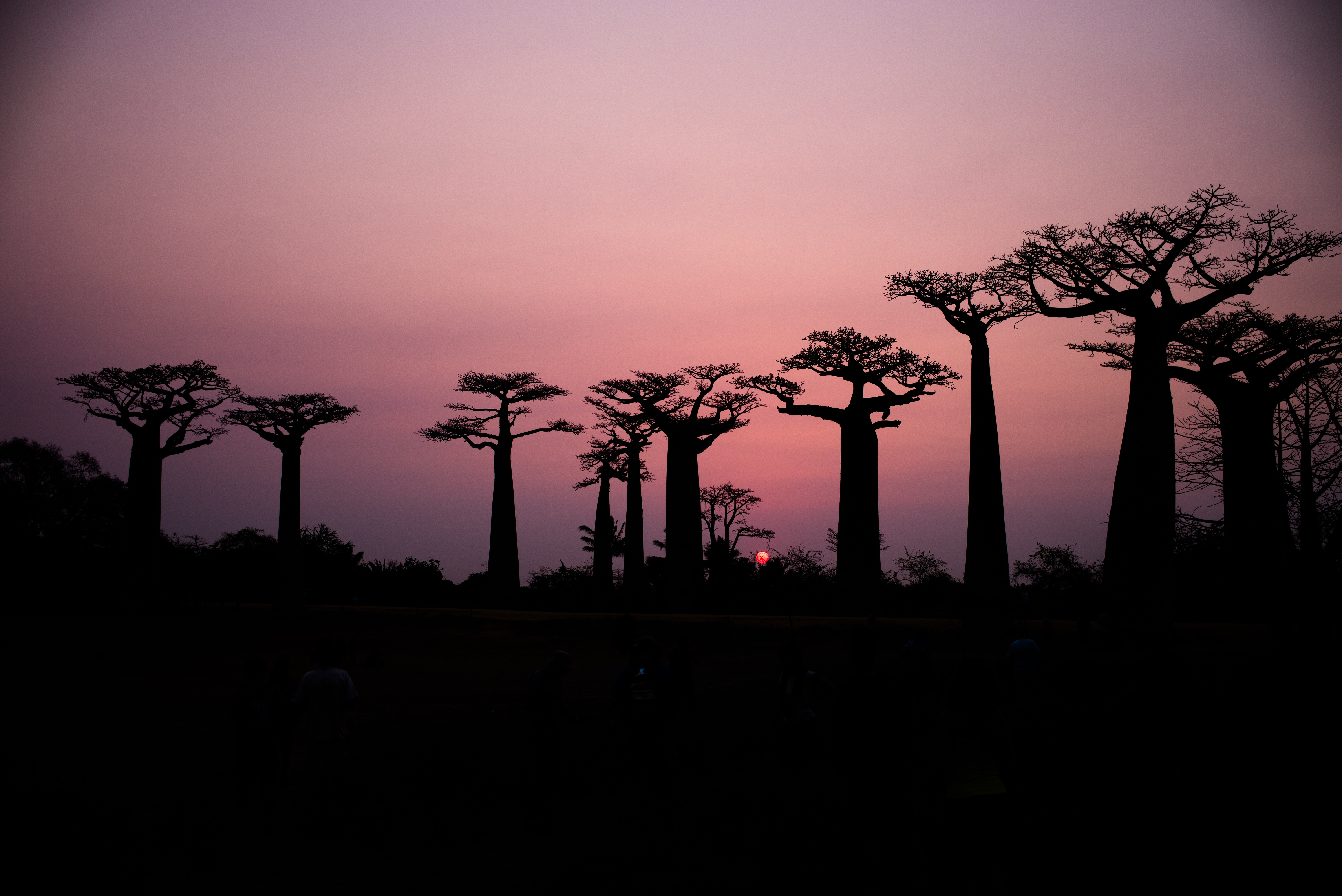 Why You Should Go to Madagascar Sooner Rather Than Later