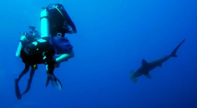 Scuba Diving with Hammer heads